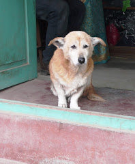 dogs of the world - Kathmandu
