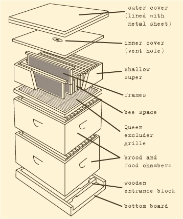 The post oil survival guide for city dwelling beekeeping for Beehive plans blueprints