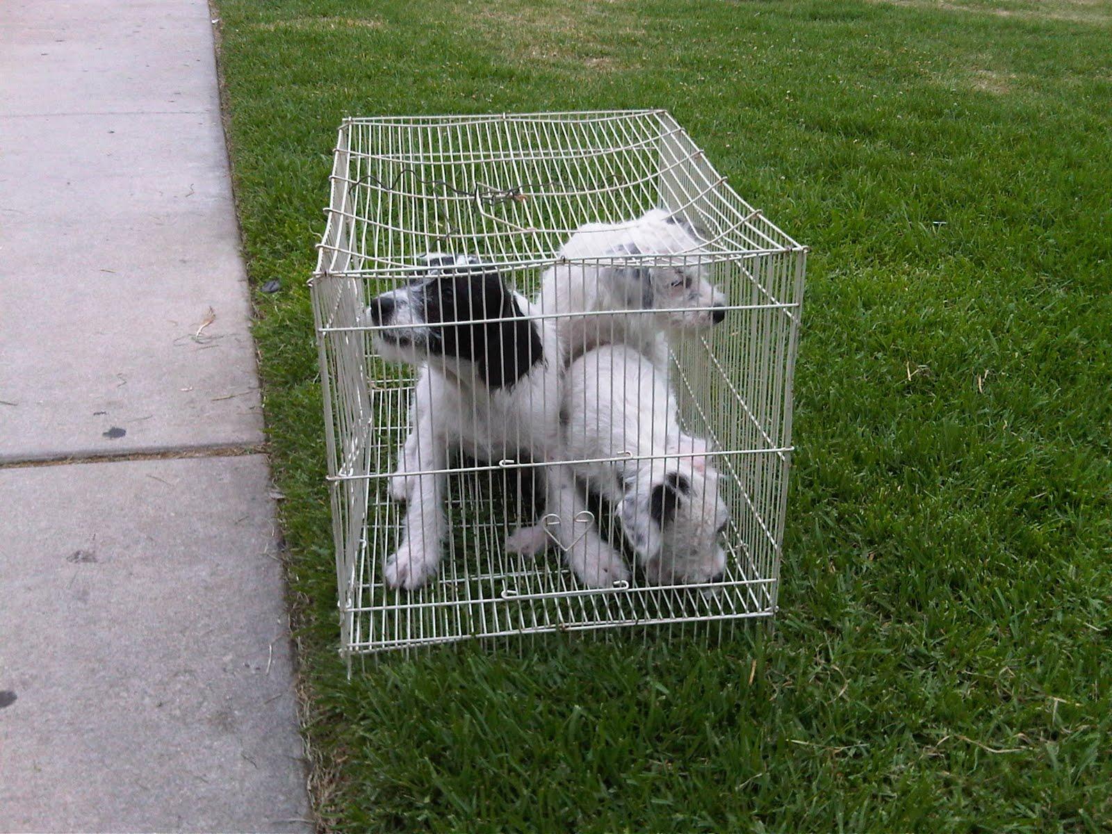 Lori s Corner – Page 3 – Downtown Dog Rescue