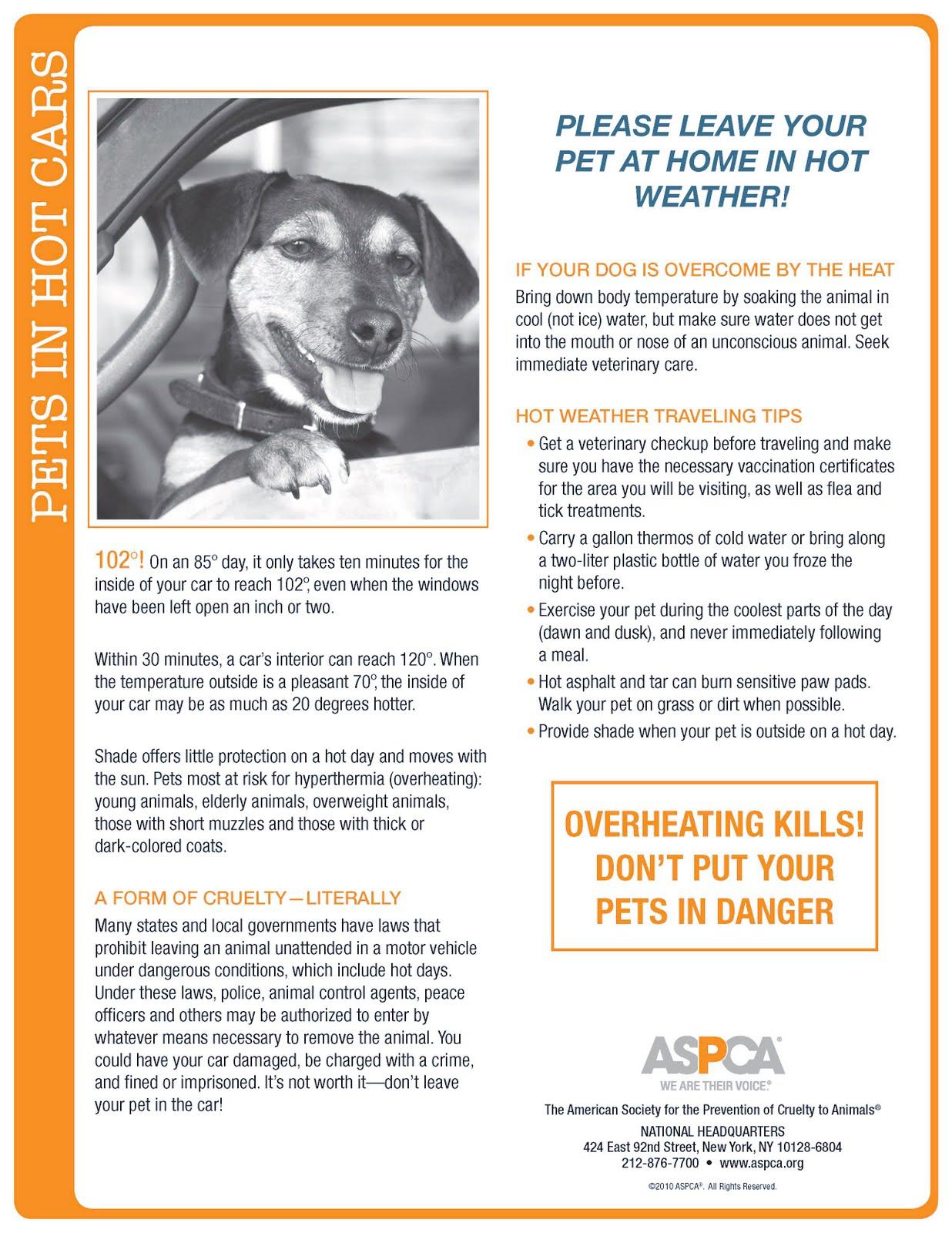 uncategorized u2013 page 11 u2013 downtown dog rescue