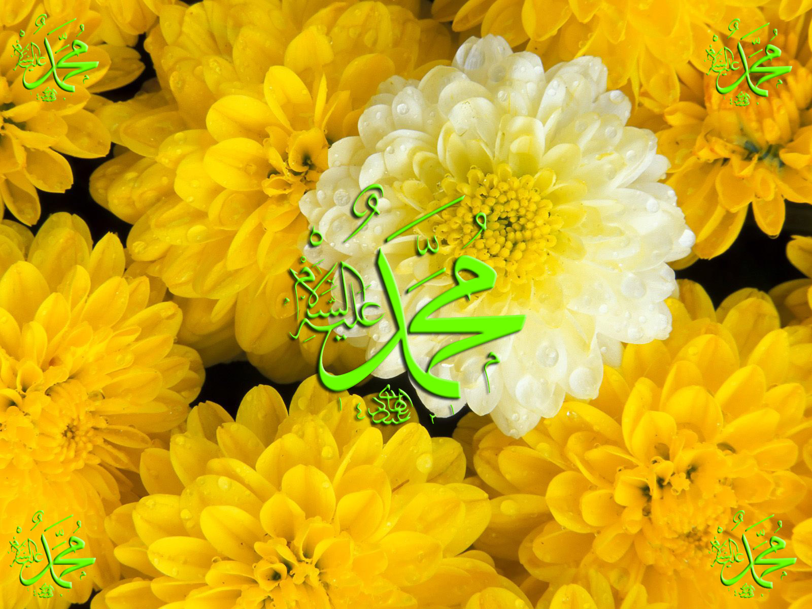 Muhammad Saw Name With Yellow Flowers Islamic Wallpapers Kaaba Madina Ra