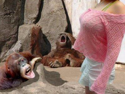 monyet pusing ngeliatin susu artis
