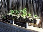Thyme's Garden