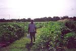Mr. Goodlow in Community Garden