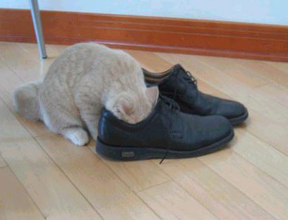 :: ATTENTION..clean your shoes everyday please.!!!! ::