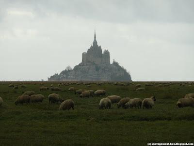 Les prés salés, les moutons, le Mont Saint-Michel