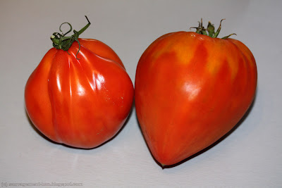 A gauche, une tomate &#171; cur de buf &#187; version supermarch. A droite, la version primeur qui a vraiment une forme de cur