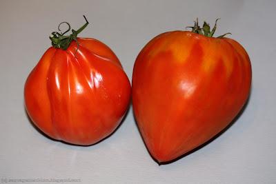 A gauche, une tomate « cœur de bœuf » version supermarché. A droite, la version primeur qui a vraiment une forme de cœur