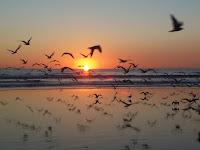 أمواج صغيرة لشريف الحكيم - صفحة 5 Sunset-birds