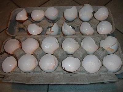 tutorial: como hacer un semillero con cascaras de huevo