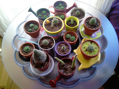 cactus, maceteros, tiestos