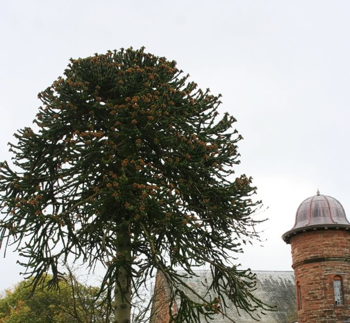 Beechtree farm majestic specimen trees scotland for Specimen trees