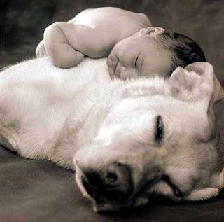 Cute Boy and Dog