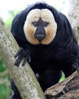 ... foto foto monyet dibawah ini benar benar aneh berikut foto foto monyet