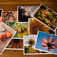 Click Below for a Set of 12 Signed Frameable Photo Notecards