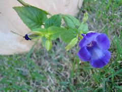 Minhas flores e suas cores