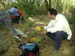 merendando papaya