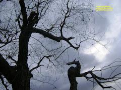 Árboles conversando