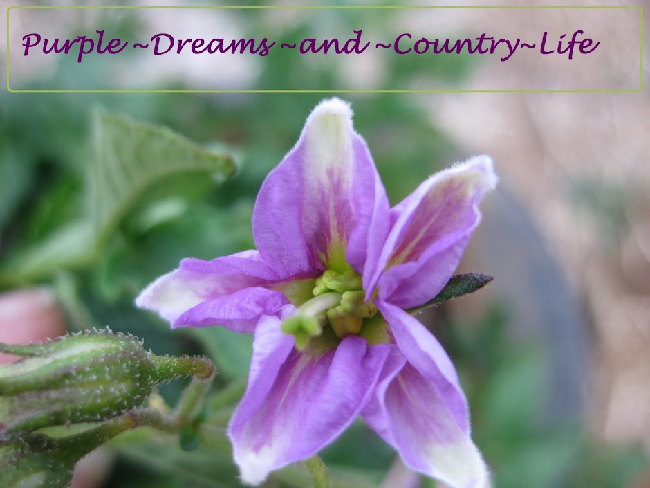 Purple Dreams and Country Life