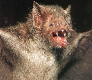 The Vampire Bat... Capcom's new VP of development