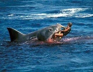 [Καρχαρίας.jpg]