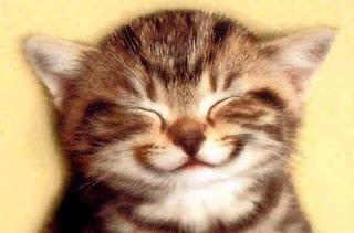 Mèo nhắm mắt dễ thương