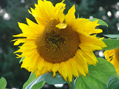 Favorite flower to grow~