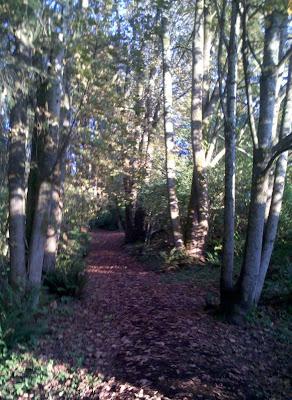 Hillside trail through the woods