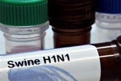 world 'getting closer' to swine flu pandemic