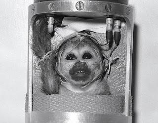 animal lovers say no to radioactive nasa monkeys