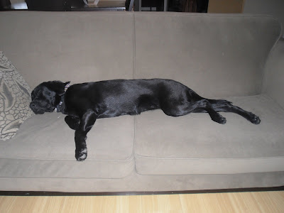 Starling streched out the full length of the couch, sound asleep with her head on a pillow.