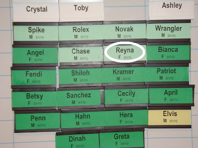 Photo of Reyna's name on the back class board in Boring.  Photo credit to Martha G.
