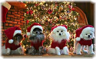 собаки, новый год, подарки