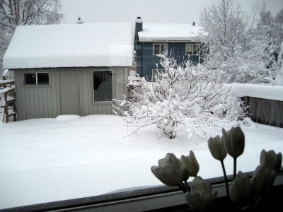 Snow in Anchorage, Alaska