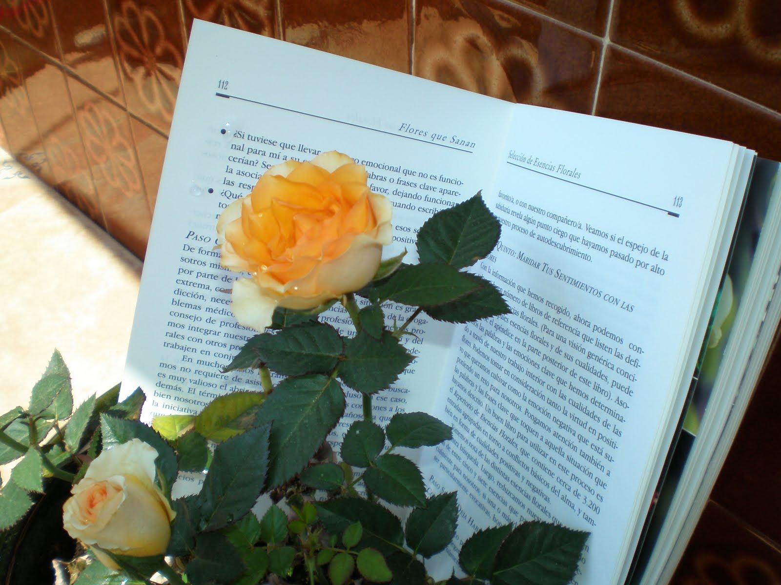 Bienvenidos al nuevo foro de apoyo a Noe #247 / 21.04.15 ~ 23.04.15 - Página 39 D%C3%8DA+DEL+LIBRO+009