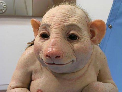 [swine+flu]