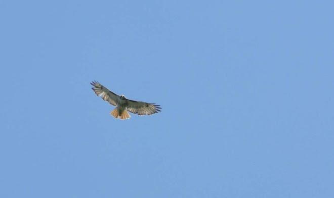 Hawk 7-8-07