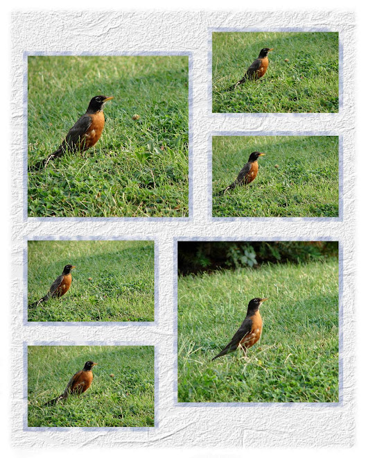 Robin in Photo layout