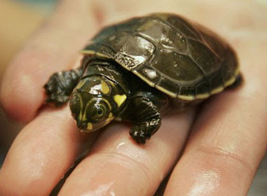 ... Turtle Rabbit Horse Reptile And more Pet Care: Turtle Care