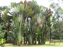 Botanical Gardens, Medellin
