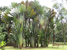 Botanical Gardens, Medellin