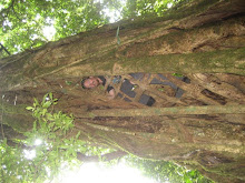 Dave Climbing a Hollow Tree