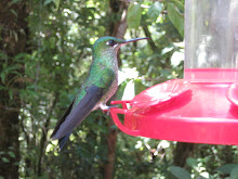 A Hummingbird