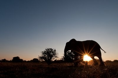 back light,elephants 