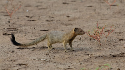 central kalahari, c4 images and safaris, private photo safari,