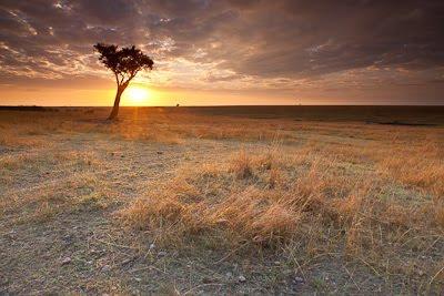 c4 images and safaris, masai mara photographic safari, wildlife photography, masai mara, isak pretorius,