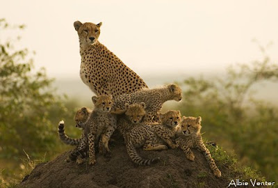 albie venter, masai mara, c4 images and safaris,