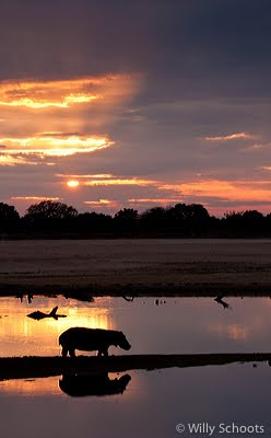 puku ridge, zambia, wildlife, south luangwa, nature photography, c4 images and safaris