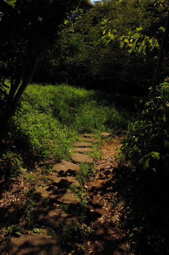 [江ノ島写真827   SDIM5615.jpg]