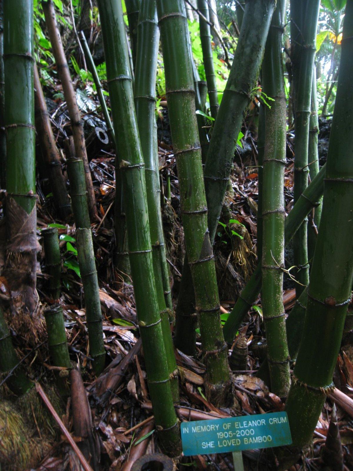 [loved+bamboo.jpg]
